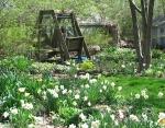 Anderson Garden